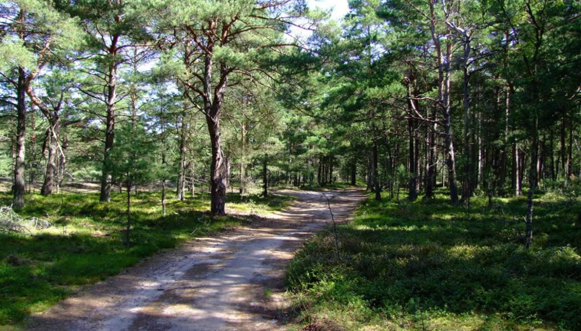 Las nadmorski w Dźwirzynie